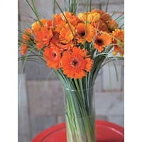 Bunchmakers Frischer Blumenstrauß Orange Gerberas Orange